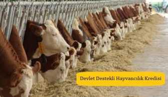 Devlet Destekli Hayvancılık 2019